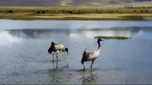 美到心醉!中国最透明的湖 又见吉祥鸟归来