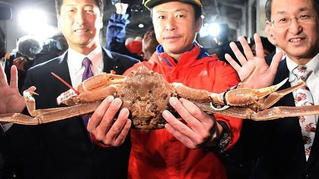 日本一只螃蟹拍出32万元高价