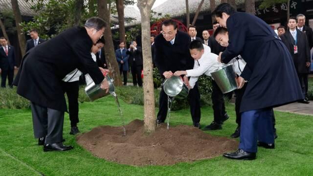 中日韩领导人在杜甫草堂共同种下一棵桂花树