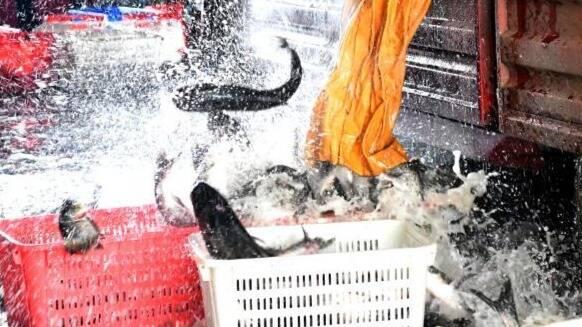 20万斤鱼运抵武汉现场