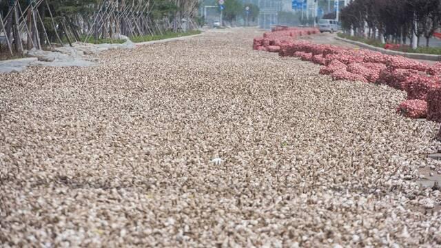 河南:大蒜价格暴跌 堆满马路无人问津