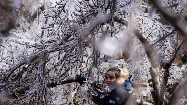 南北半球冰火两重天 巴西罕见降雪树木挂冰凌