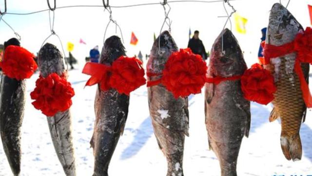 内蒙冬捕:给鱼绑上大红花