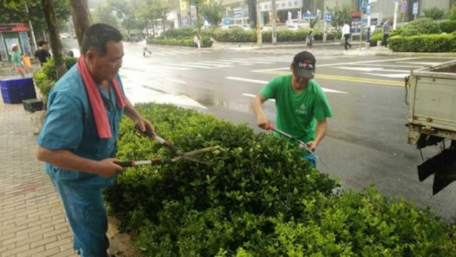 市南绿化精心养护 精细管理一草一木