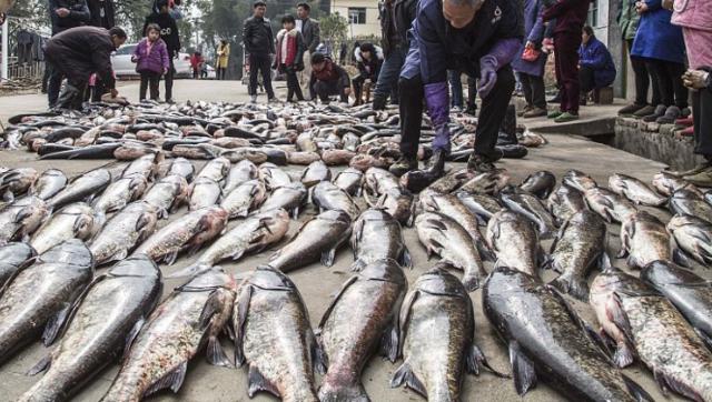 江西村民分领万斤鲜鱼