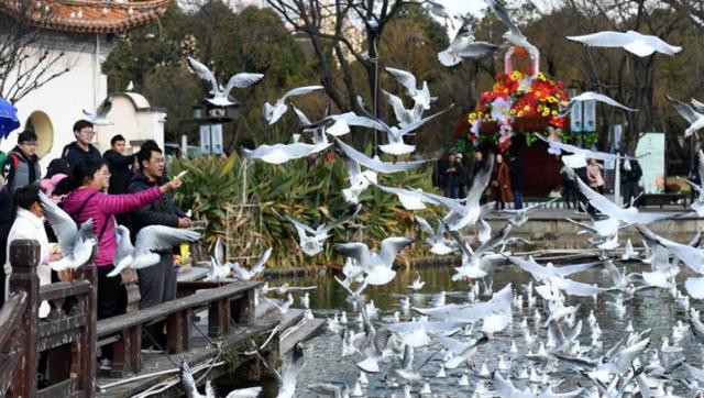 游园赏鸥庆新年