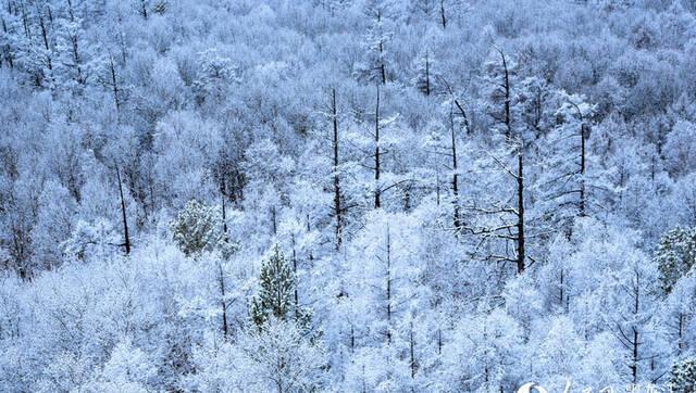 塔河雪景 千树万树凇花开