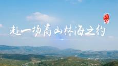凤凰视频丨来沂源,赴一场高山林海之约