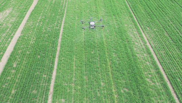 利辛县:疫情期间 植保无人机助力困难家庭小麦春管