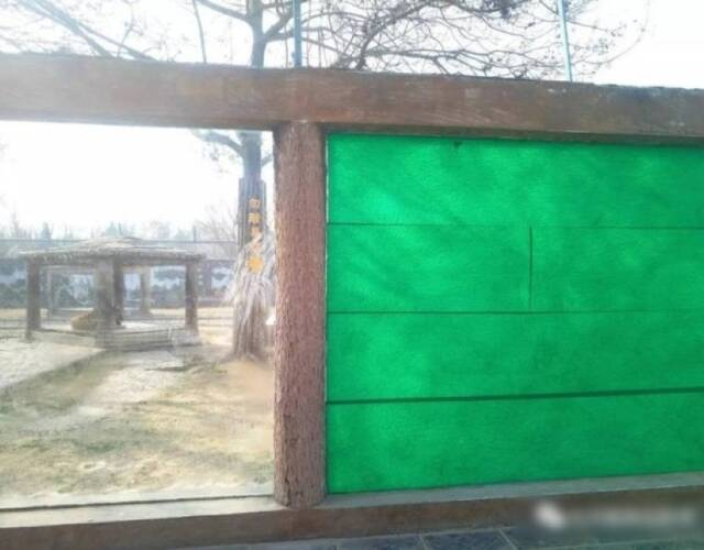 动物园中虎园玻璃墙破裂