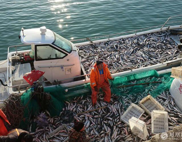 2月4日,立春时节,山东烟台芝罘岛东口,渔民在捕捞养殖的梭子鱼。孟向京/摄