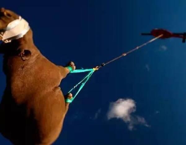 将世界野生动物基金会wwf黑犀牛活动范围扩展项目认定的严重濒危的19