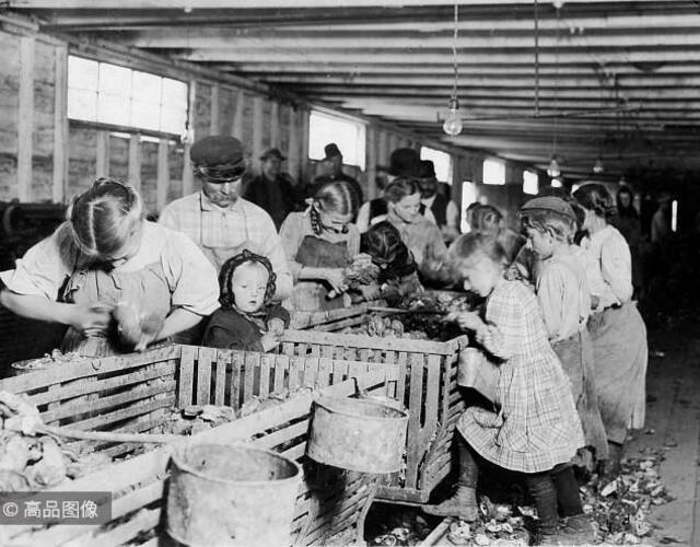 牡蛎工厂的工作通常从凌晨3点开始,下午5点结束。站在中间的婴儿,当她掌握了使用刀具的能力后,家人会让她马上加入工作。图片来源:高品图像