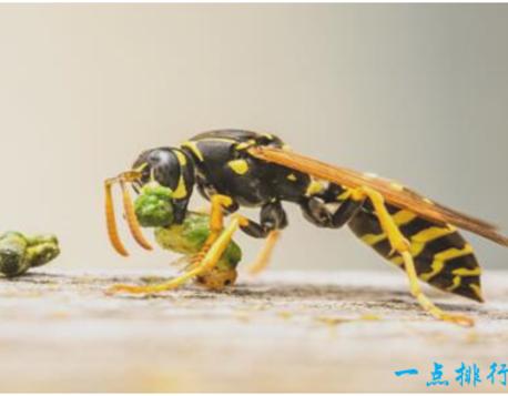蜜蜂在我们的印象里一直都是勤劳的采蜜者的形象,不会主动蜇人,就算蜇了人,伤害性也不大。