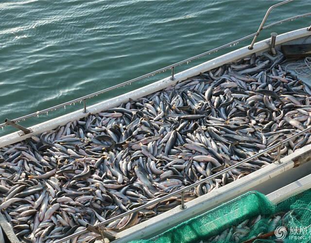 捕上来的鱼装满了船。
