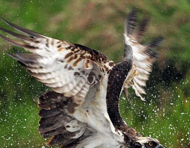 野生动物摄影师比尔