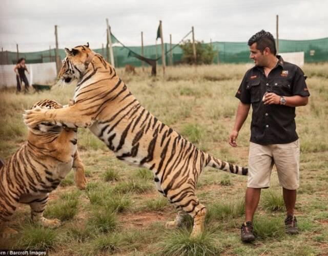 我宁愿被老虎杀死 也不愿它被谋杀