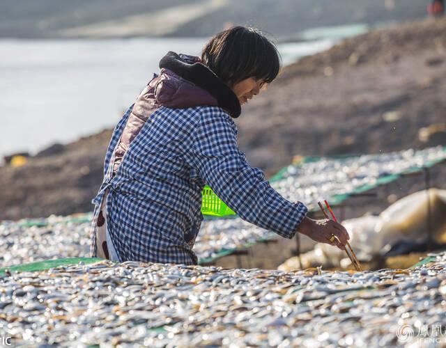 渔民在鄱阳湖畔晒鱼。