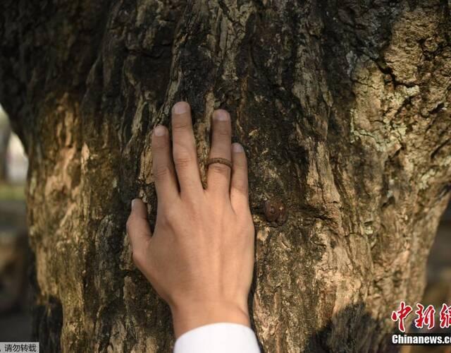 """託雷斯用帶著""""戒指""""的手撫摸樹""""新娘""""。"""