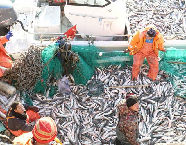 几个渔民在作业。
