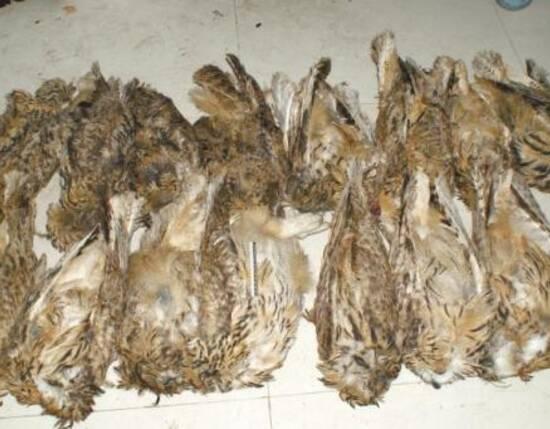 四川破非法收购出售野生动物案