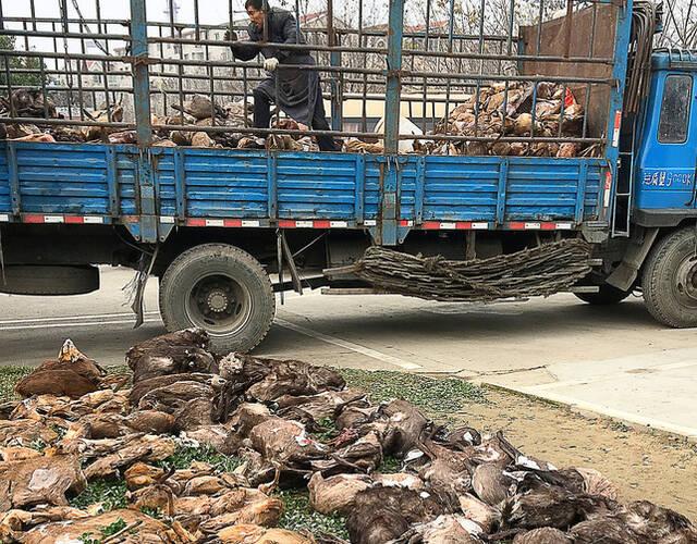 男子家藏10吨野生动物