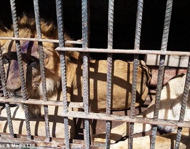 动物保护组织的人称,笼中除去狮子和豹子等大型食肉