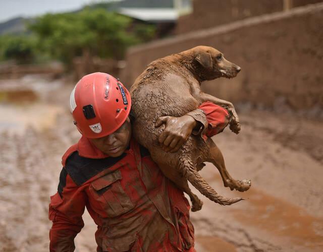 在这场灾难中,好在有这些专门救援动物的搜救团体和志工,才可以让这些