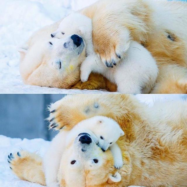 20张证明母爱最伟大的动物亲子照,看完整个人被暖化!