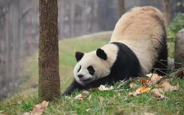 动物们伸懒腰的姿势好可爱好萌啊