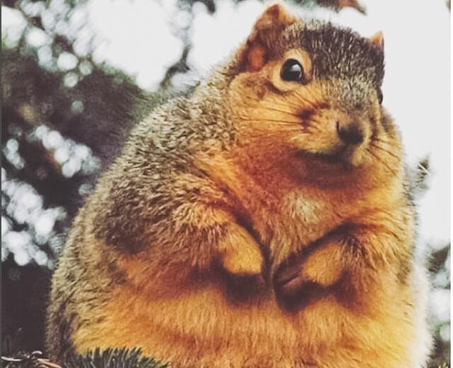 这些动物说:胖是一种气质,可爱的气质,太可爱了
