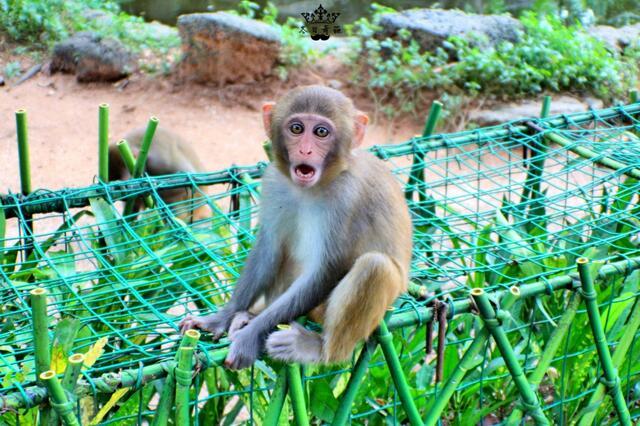 南湾猴岛,坐索道看猴子的有趣地带