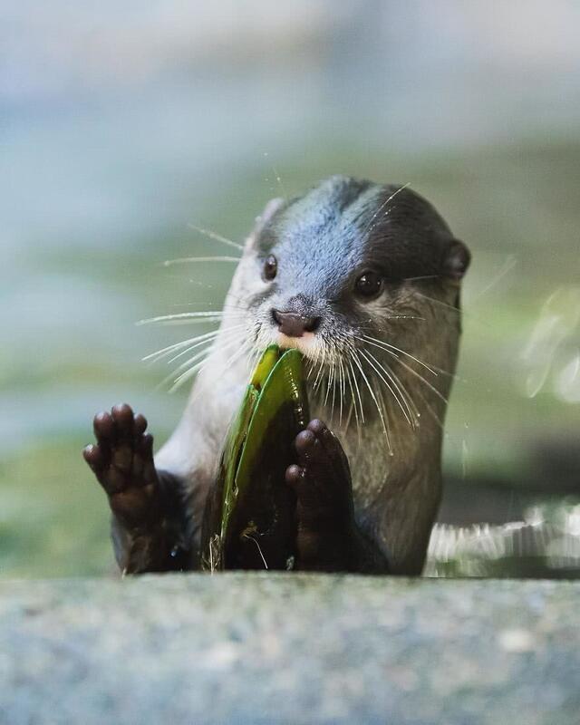 这只小动物吃东西的样子确实很萌.