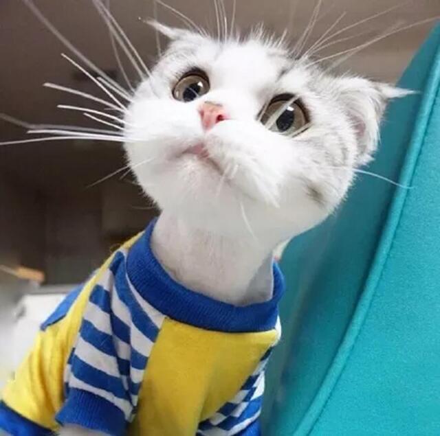 这是你见过最可爱,最萌的包子脸猫咪!