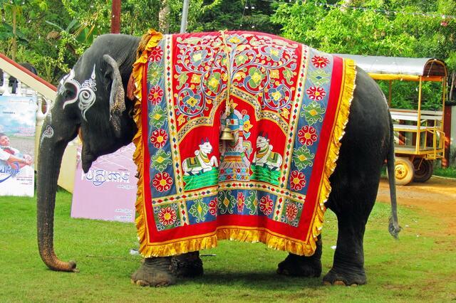 直击东南亚各国的大象 印度看作神物 泰国当成旅游
