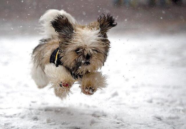 这些小动物们都第一次看到雪,它们的反应太可爱了