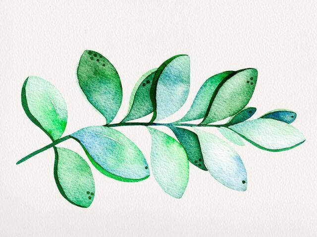 小清新手绘多肉植物插画
