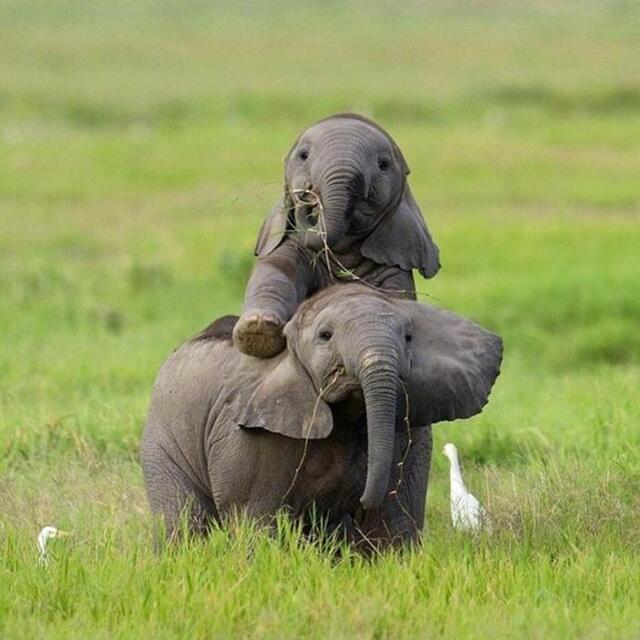昨天是世界大象日,ins网友们用可爱的小象宝宝照片刷