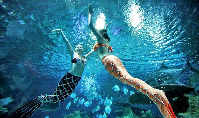 青岛海底世界美人鱼_海底世界美人鱼,吸引众多游客眼球,小孩子都乐翻了