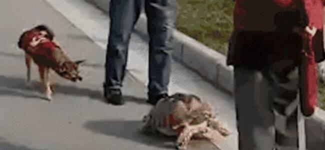 西安大爷街头溜乌龟 叹气:它把狗腿咬断了