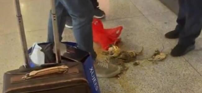 男子带活螃蟹上高铁被拦当场踩死 铁路客服:绑住腿就能带了