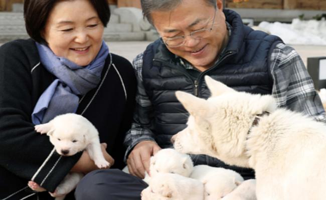 金正恩送给韩国的丰山犬生娃啦!