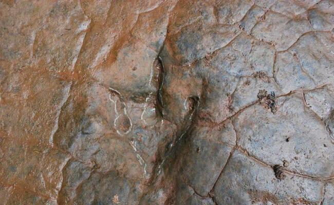"""贵州:河滩""""怪脚印""""为一亿年前恐龙足迹"""