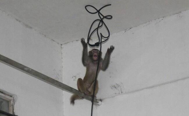 猴子在杭州一居民区玩耍3天 最终被五花大绑带走(图)
