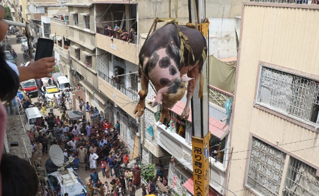 """巴基斯坦人用起重机运牲畜 牛在楼间""""飞"""" 组图"""