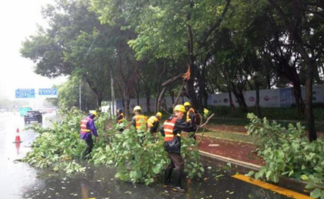 台风中的深圳:路边树木、标牌成片倒下 现场图