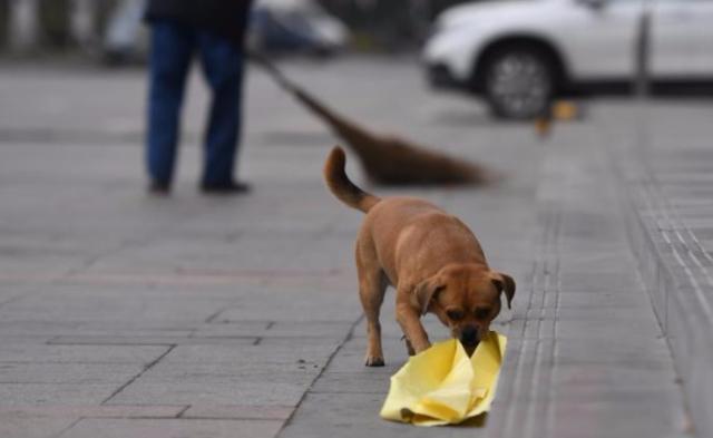 长春忠犬帮清扫工主人捡垃圾三年丨组图