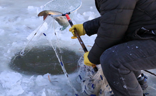市民松花江上凿冰捕鱼现场