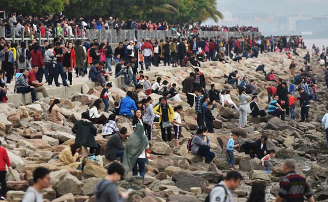 游客挤满深圳湾观鸟一幕