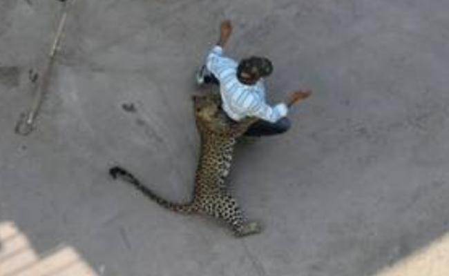 印度花豹闯民居伤人现场